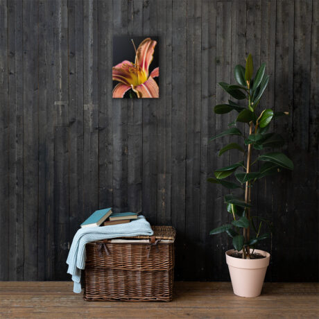 Orange Daylily Black Canvas - wooden wall