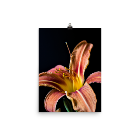 Orange Daylily Black Poster