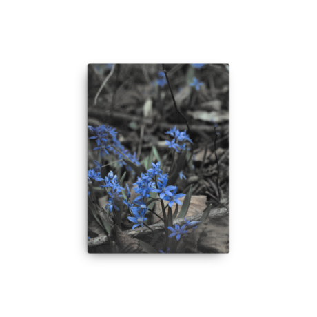 Blue Woodland Flowers – Canvas