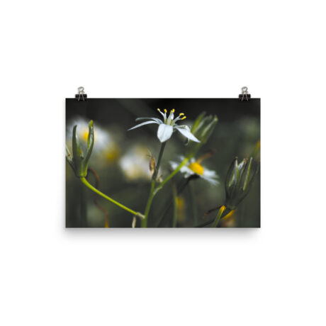 Tricolor Flower Meadow – Poster