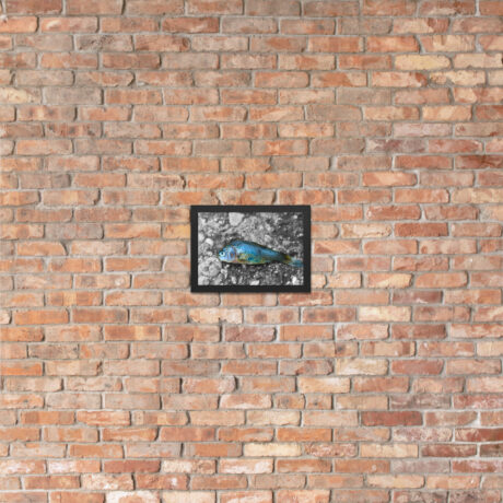 Dead Fish on Concrete – Framed poster 21x30cm brick wall