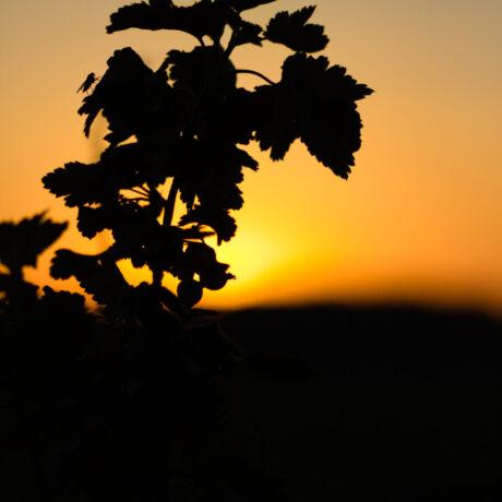 Sunset Silhouette – High Resolution