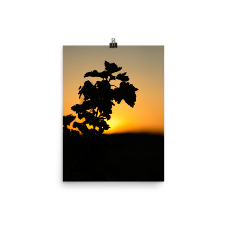Sunset Silhouette – Poster