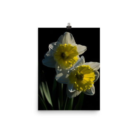 Narcissi In The Morning – Poster