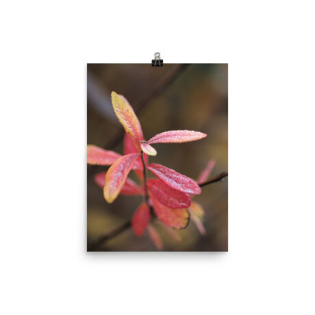 Red Autumn Leaves Morning Dew – Poster