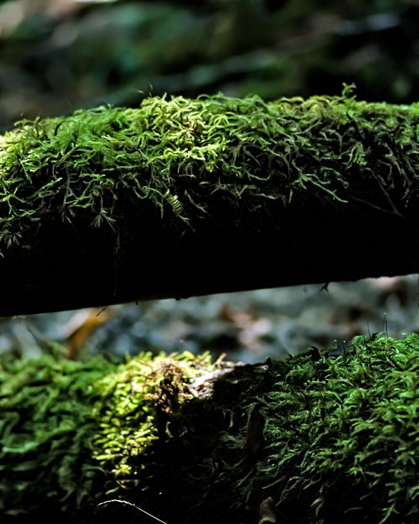 Creekside forest moss